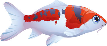 Fish koi. Cartoon illustration of a fish koi Stock Photography