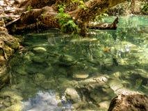 Fish - Kurşunlu Şelalesi (Kursunlu Waterfall) - Antalya - Turkey Stock Photo