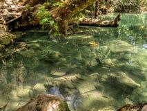 Fish - Kurşunlu Şelalesi (Kursunlu Waterfall) - Antalya - Turkey Royalty Free Stock Photography