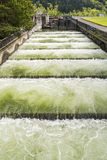 Fish Ladder Stock Photography