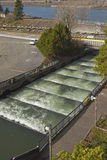 Fish ladders in Bonneville Oregon. Royalty Free Stock Images