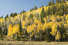 Fish Lake fall colors 3 Stock Photo