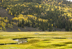 Fish Lake fall colors 7. Brilliant fall colors along the Fremont River in Fish Lake National Forest in Southern Utah royalty free stock photo