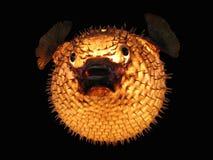 Fish lamp Stock Images