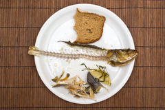 Fish leftovers Royalty Free Stock Images