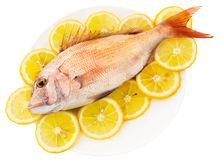 Fish with a lemon. Dorado lays in an environment of circles of a lemon on a white background Stock Photography