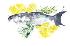 Fish with lemon and herbs ready to cook watercolor painting illustration. Isolated on white Royalty Free Stock Images