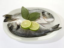 Fish with Lemon Slices Stock Photos