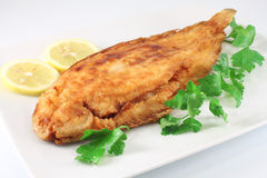 Fish lemon sole Royalty Free Stock Photos