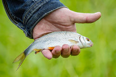 Fish lies in the hand. Of the fisherman Royalty Free Stock Images