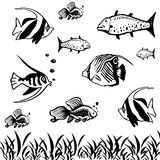 Fish life Stock Images
