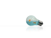 Fish in a light bulb. Two gold fish swim in clear glass lightbulb Stock Photography