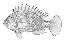 Fish line art zentangle style for coloring book for adult,tattoo,logo, t shirt design, element for design and so on. Fish line art zentangle style for coloring Stock Photo