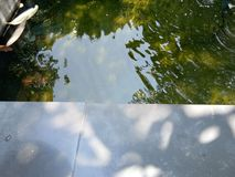 Fish in little pond royalty free stock photography