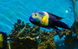 Fish that live in the Red Sea Stock Photo