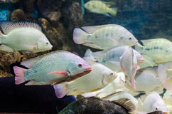Fish that live in the Red Sea Royalty Free Stock Image