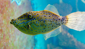 Fish that live in the Red Sea. Royalty Free Stock Photography