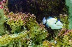 Fish that live in the Red Sea. Royalty Free Stock Photo