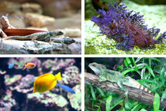 Fish and lizard Royalty Free Stock Image