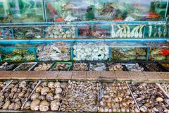 Seafood Market Fish Tanks in Sai Kung, Hong Kong. Fish, lobsters, crabs and other mollusk seafood are crammed into fish tanks at the seafood market in Sai Kung Stock Images