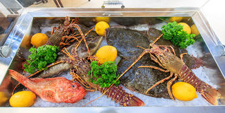 Fish and lobsters. Lie on ice Stock Photo