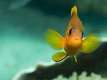 Fish looking at camera