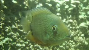 Fish looking at me stock video footage