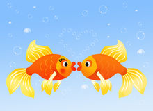 Fish in love Royalty Free Stock Photos