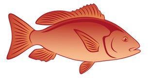Fish Lutjanus Stock Photo