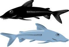 Fish  mackerel Stock Image
