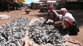 Fish. Madagascar Stock Photography