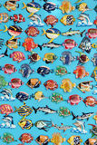 Fish magnets Stock Photography