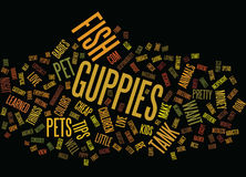 Fish Make The Greatest Pets Word Cloud Concept Royalty Free Stock Photography