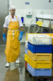 Fish manufacture worker. A male worker in a fish processing manufacture, he is responsible for carrying heavy boxes full of fish. The image is part of Fish Stock Photos