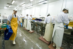 Fish manufacture workers. Interior of a small fish processing manufacture, fish cutters and box carrier in the image.  The image is part of Fish Processing Stock Photo
