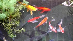 Fish stock footage