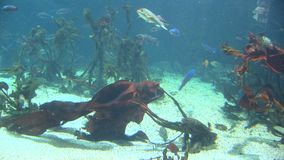 Fish - marine life. School of fish - underwater - video high definition - real time stock video footage