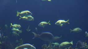 Fish Swimming Under Water stock footage