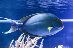 Fish in the marine tank stock images