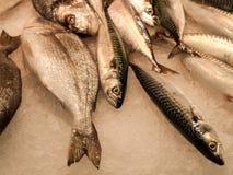 Fish at the market. Fish at La Boqueria market in Barcelona, Spain Stock Image
