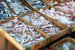 Fish market. The Fish market in Turkey (Bodrum Stock Photography