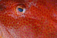 Fish at market Stock Photos