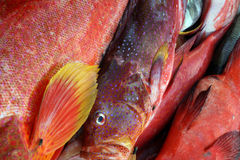 Fish at market. Some fish in a tropical market Stock Images