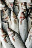 Fish at market. Rows of fish in a market display Stock Image