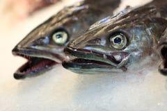Fish on market Royalty Free Stock Photo