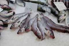 Fish at the market. In Spain Royalty Free Stock Image