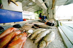 The fish market Stock Images