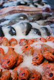 Fish market. In Auckland, New Zealand royalty free stock photography