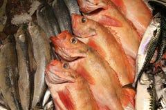 Fish market Stock Photography