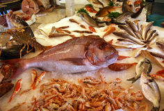 Fish at market Stock Photo
